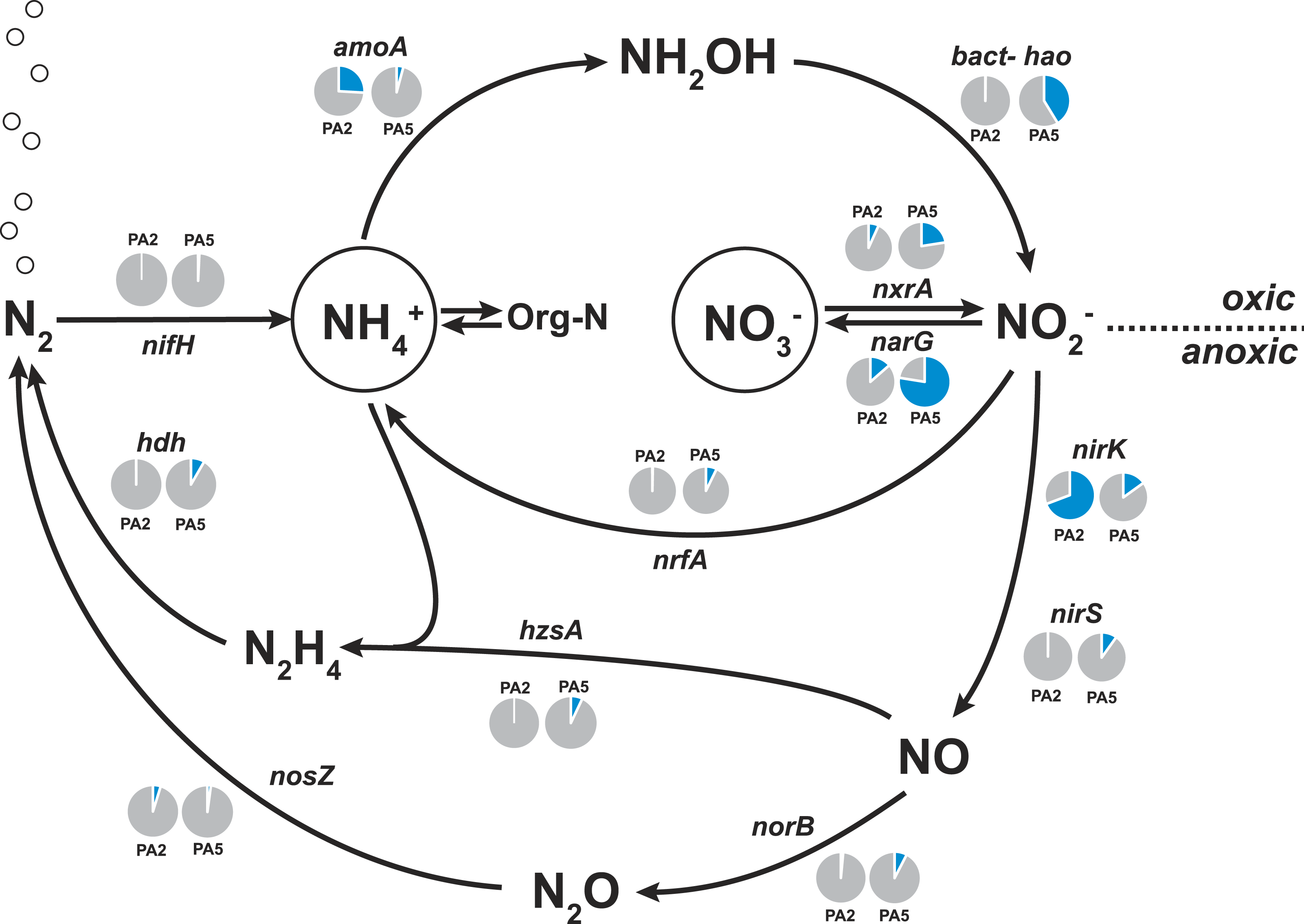 metagenomic analysis of nitrogen and methane cycling in