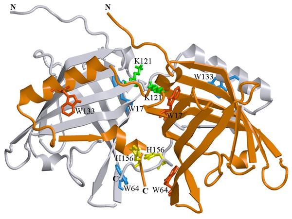 3D structure of bOBP.