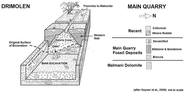 Schematic plan of the Drimolen Main Quarry excavation area and deposits.