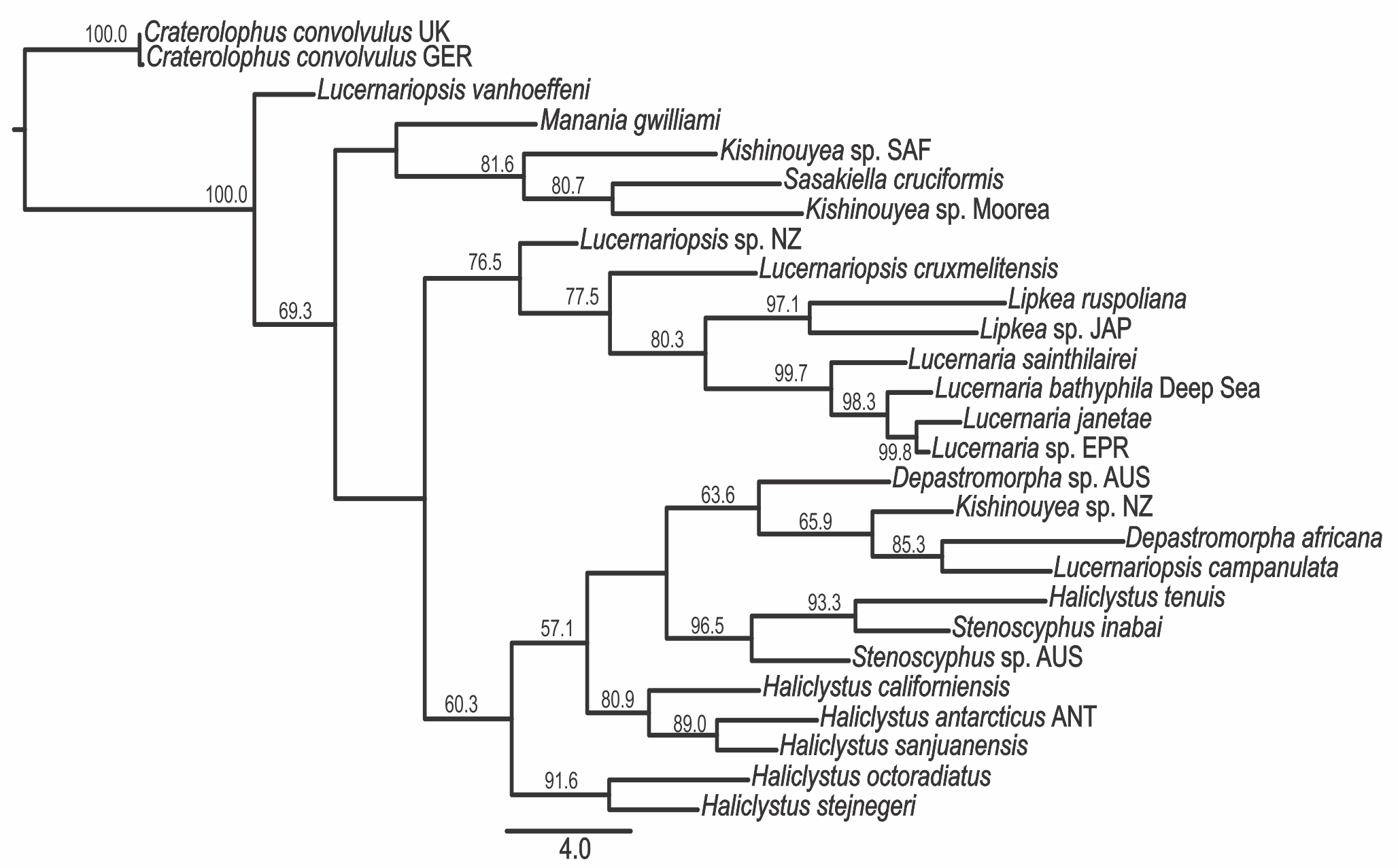 Systematics Of Stalked Jellyfishes Cnidaria Staurozoa Peerj Conception De Circuits Imprims Download
