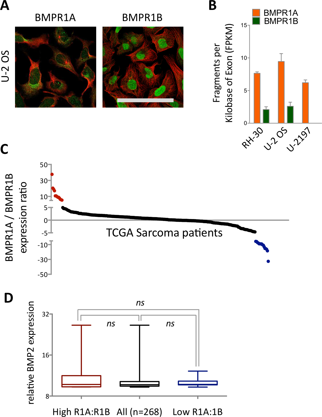 Bmp2 Bmpr1a Is Linked To Tumour Progression In Dedifferentiated Liposarcomas Peerj