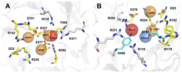 Binding modes of NAIs in active site of influenza A and B neuraminidase are shown in (A) and (B), respectively.