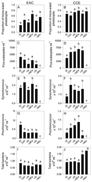 Phototrophic and total bacteria responses to nutrient amendment.