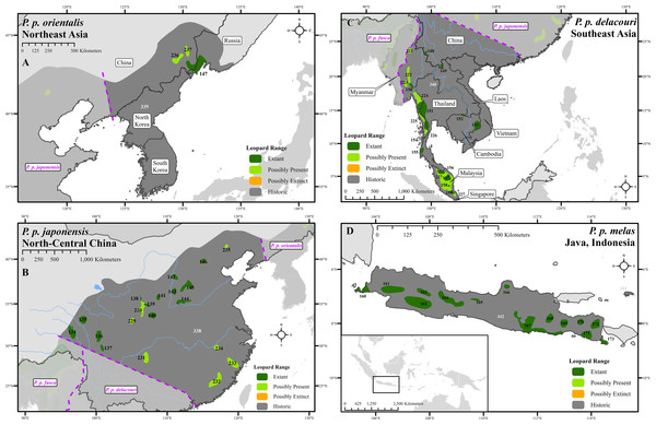 Leopard range and subspecies delineation across eastern Asia.