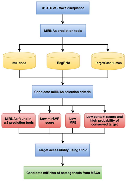 Schematic representation of the workflow for the identification of miRNAs involved in osteogenesis.