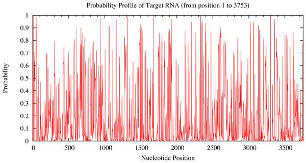 Probability profile of 3'UTR RUNX2 target RNA.