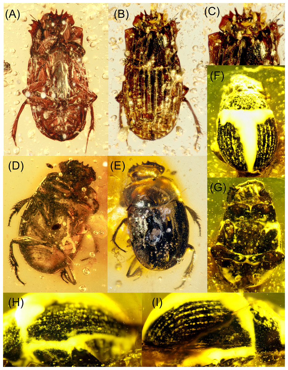 A review and phylogeny of Scarabaeine dung beetle fossils