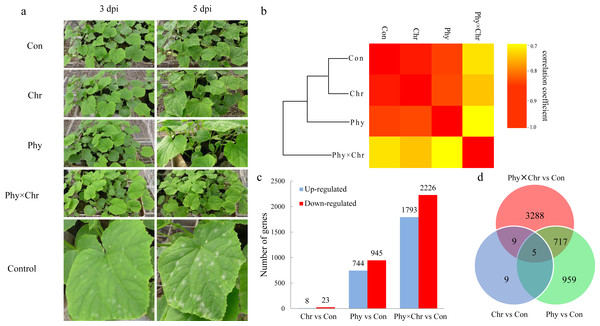 The global transcriptome similarity and differences caused by physcion and chrysophanol treatment for cucumber powdery mildew.