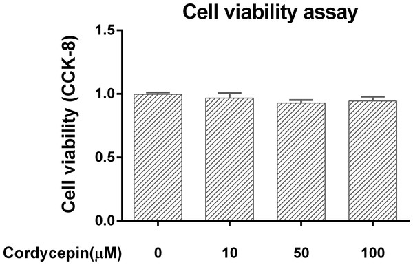 Cell viability assay in the NP cell culture model.
