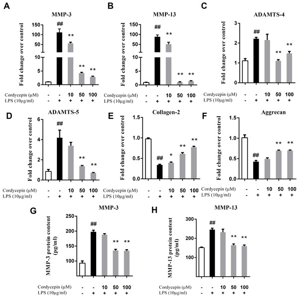 Cordycepin regulates the LPS-induced matrix-degrading enzymes and extracellular matrix related gene expression in NP cells.