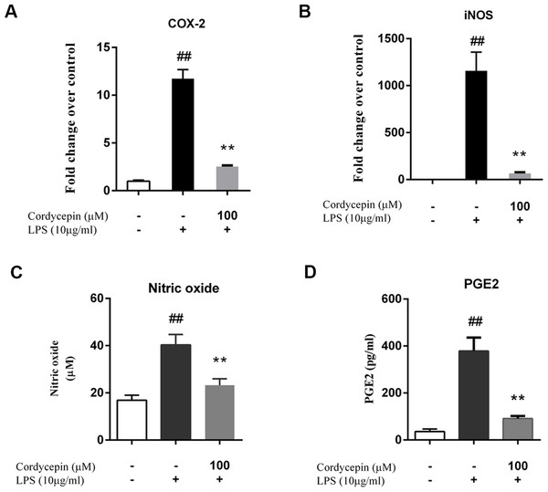 Cordycepin decreases the LPS-induced production of PGE2 and NO in NP cells.