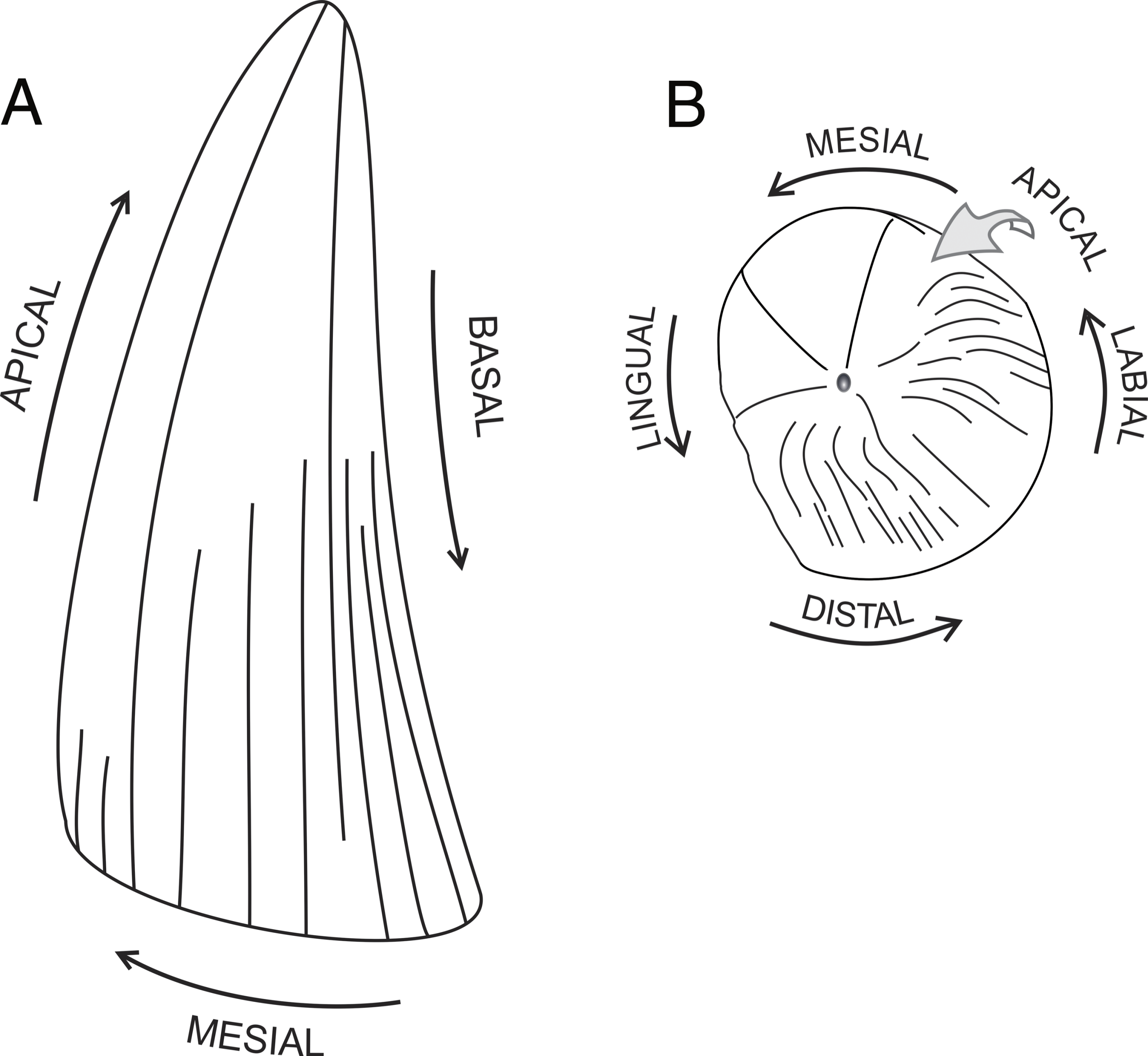 A reappraisal of Polyptychodon (Plesiosauria) from the