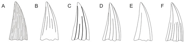 Pliosaurid tooth crown morphologies according to Tarlo (1960).
