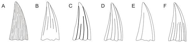 Pliosaurid tooth crown morphologies according to Tarlo (1960).