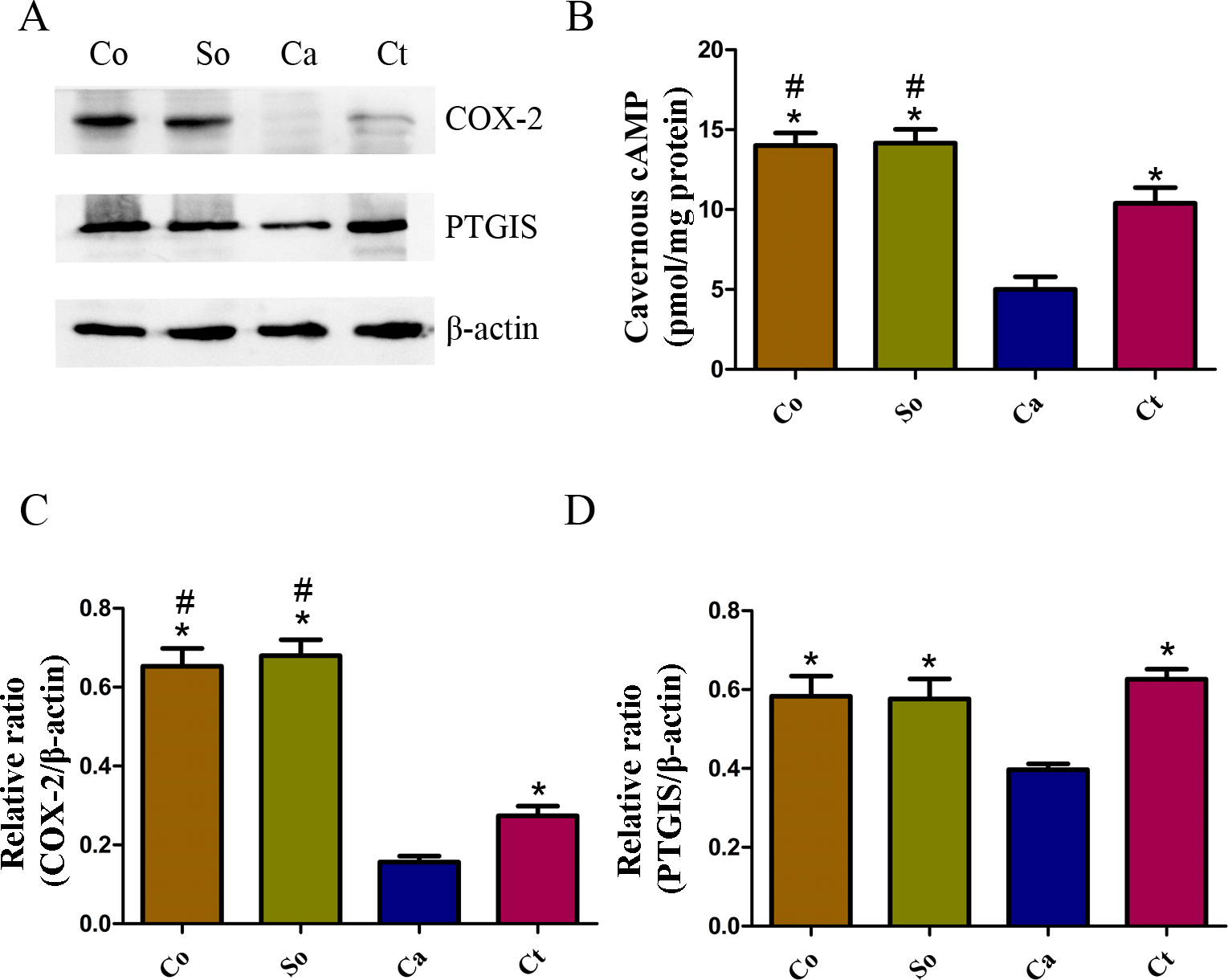 Testosterone improves erectile function through inhibition of