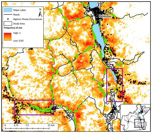 Relative frequency of use of the landscape for bighorn sheep movement and most frequently used road-crossing sites predicted by the bighorn movement model for a section of the study area.