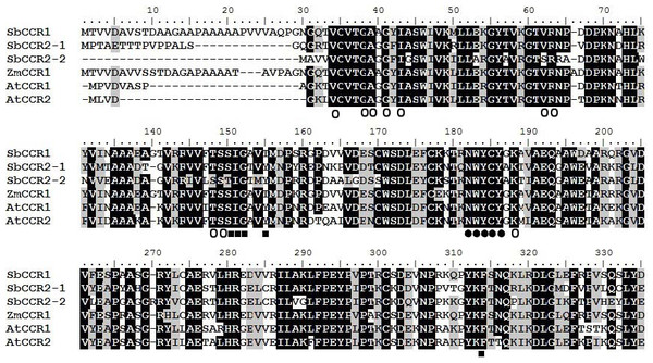 Multiple alignment of the protein sequences of sorghum CCR proteins and other plant CCR proteins.