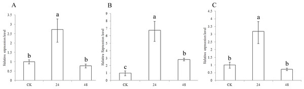 Expression of sorghum CCR genes in CK and the drought treatment at different times.