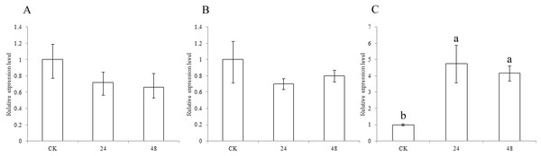Expression of sorghum CCR genes in CK and the pest treatment at different times.