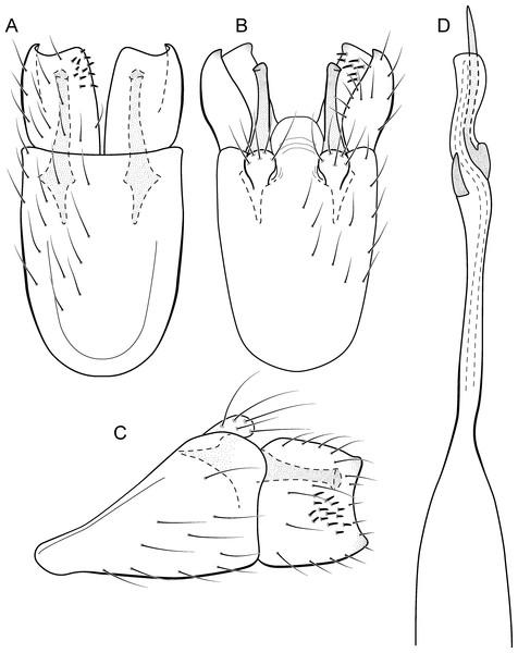 Integrative Taxonomy Of Metrichia Ross Trichoptera Hydroptilidae