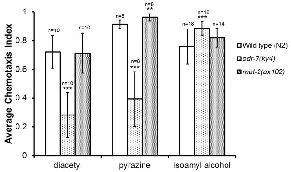 mat-2(ax102) APC1 loss of function mutants show increased chemotaxis towards pyrazine but not diacetyl or isoamyl alcohol.