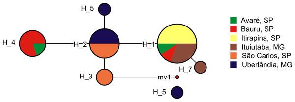 Haplotype network of Proceratophrys moratoi populations.