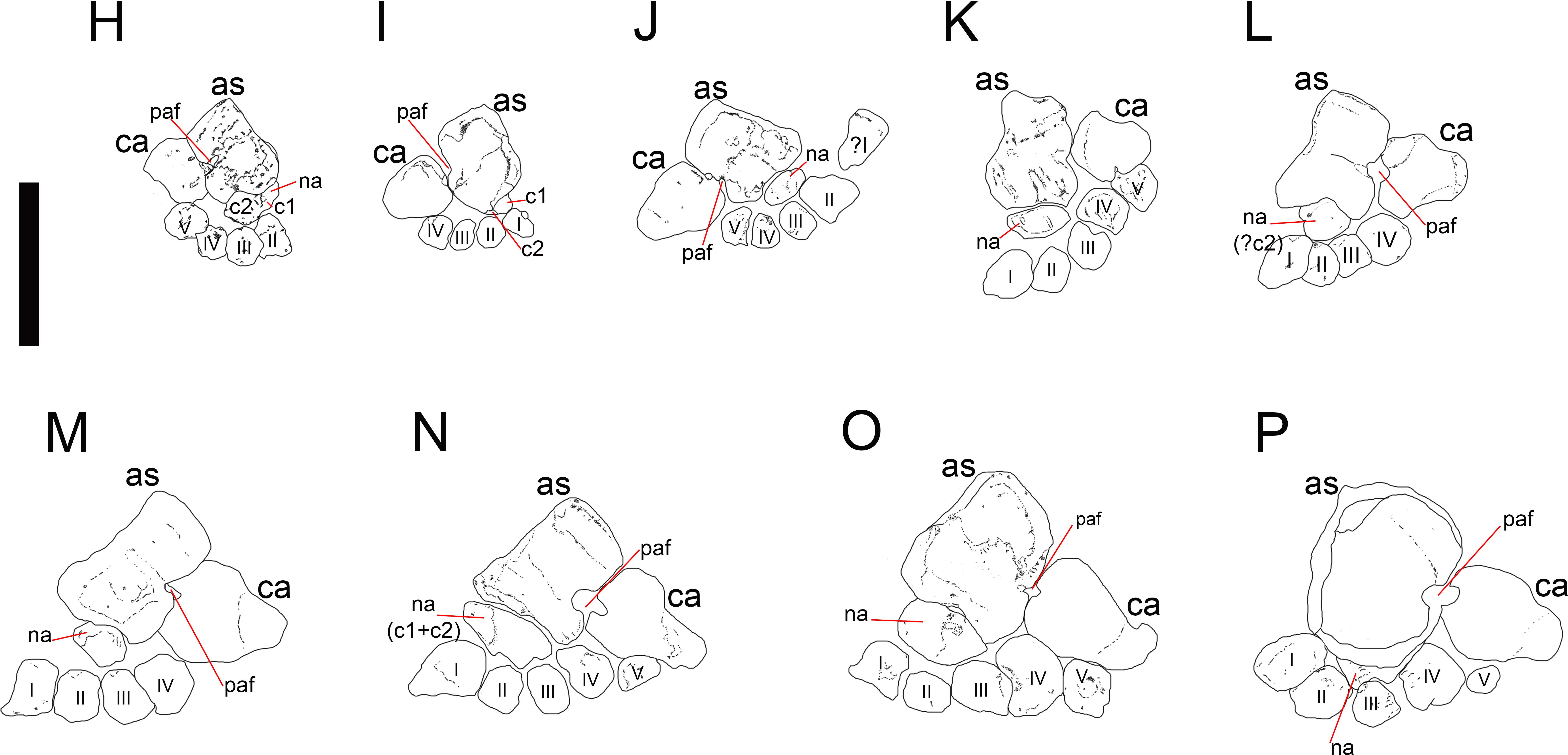 Sistematica evolutiva yahoo dating