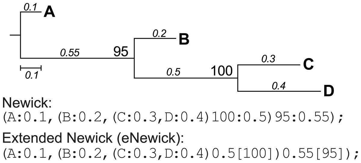 Physortr A Fast Flexible Tool For Sorting Phylogenetic Trees In R