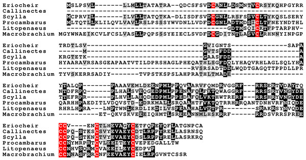 Sequence alignment of the decapod adrogenic insulin-like peptides.