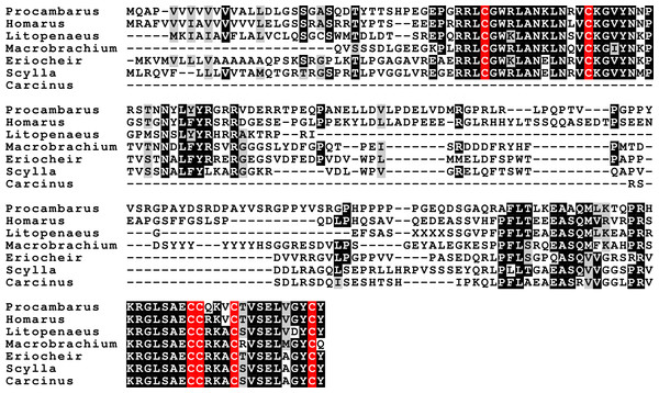 Sequence alignment of the decapod insulin-like peptides.