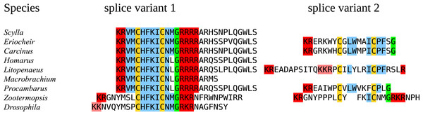 Last parts of CNMamide precursors.