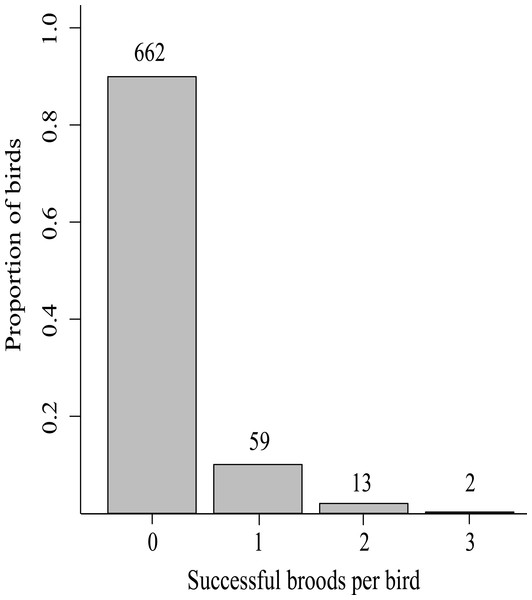 The proportion of successful broods per bird (n subset indicated above bars) produced in the lifetimes of 736 Greenland white-fronted geese marked as first year birds at Wexford, Ireland, 1983–2003.