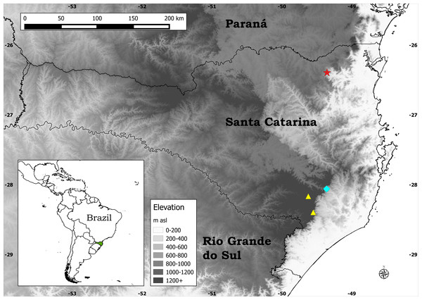 Distribution map of the three species of Plantago endemic to Santa Catarina.
