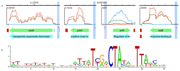 RpoS promoter verification with RNA-Seq data.