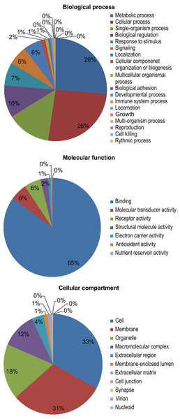 Gene ontology (GO) functional categories of the M. reevesii assembly.