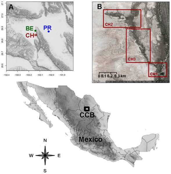 Location of the sampling sites in the Cuatro Ciénegas Basin, Coahuila, Mexico.