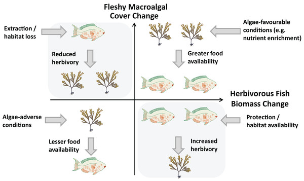 Relationship between changes in herbivorous fish biomass and benthic fleshy macroalgal cover.