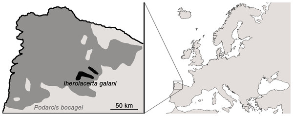 Distributional ranges of Iberolacerta galani and Podarcis bocagei.