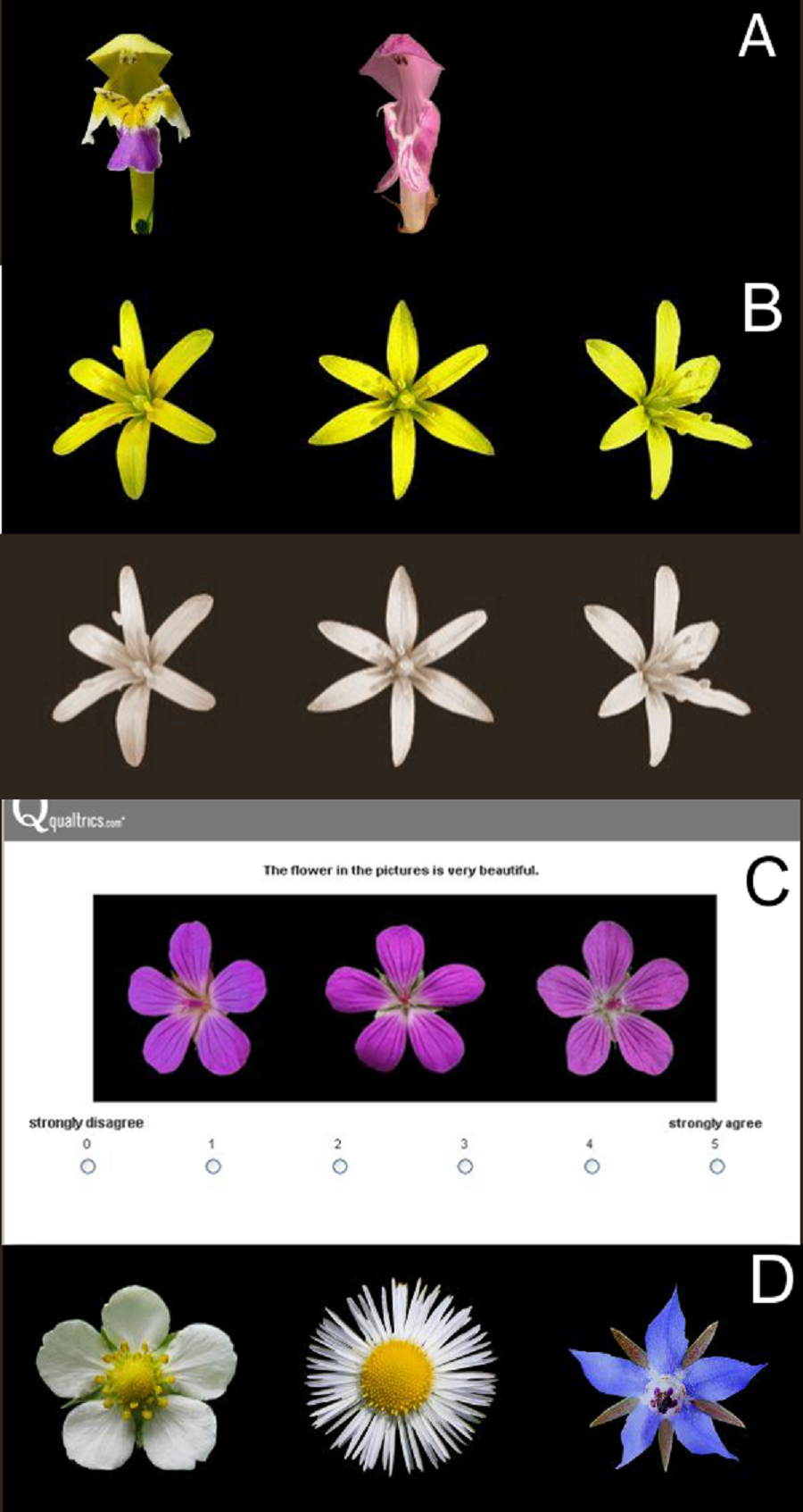 What flowers do we like the influence of shape and color on the download full size image izmirmasajfo Choice Image