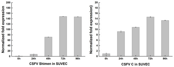 qRT-PCR results of CSFV Shimen and CSFV C strains after infection in SUVEC.