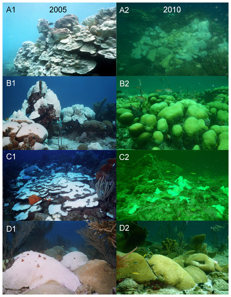 Photographs taken with the same camera, between 10 am and 3 pm during the coral bleaching surveys in October of the two warm-water events in 2005 (A1--D1) and 2010 (A2--D2) on Barbados reefs, showing the marked difference in water colour and light penetration.