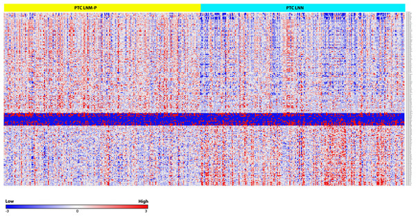 Heat map of the 181 differentially expressed miRNAs in PTC LNM-P and LNN (Student's T-test with BH corrected p value ≤ 0.05).