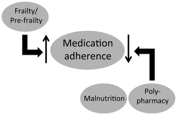 Schematic diagram illustrating the identified relationship between medication adherence and components of the geriatric syndrome among end-stage renal disease patients under chronic dialysis.