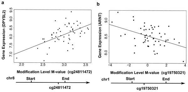 Examples showing that cytosine modifications account for the 'couple effect' of gene expression.