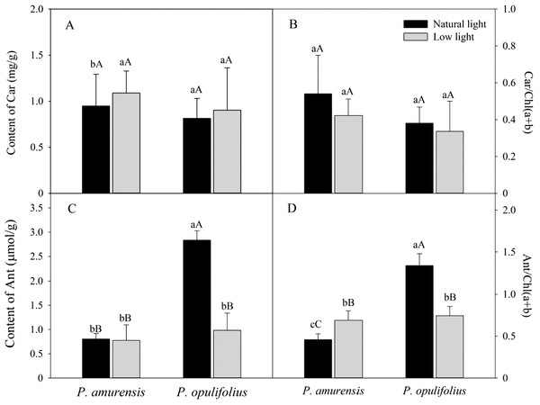"Content of Chla (A), Content of Chlb (B), Chl(a + b) (C) and Chla/b (D) in the leaves of P. amurensis Maxim and P. opulifolius ""Diabolo"" under natural and low light intensities."