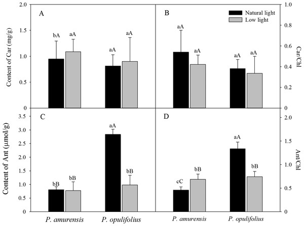 "Content of Car (A), Car/Chl (B), Content of Ant (C) and Ant/Chl (D) in leaves of P. amurensis Maxim and P. opulifolius ""Diabolo"" under natural and low light conditions."