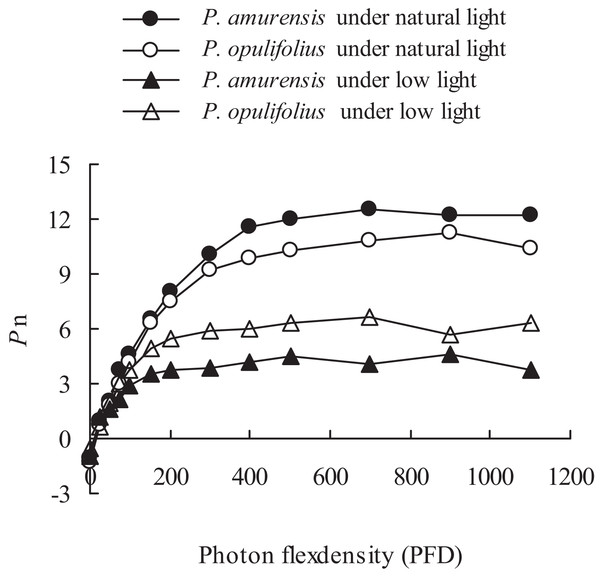 "Net photosynthesis rate in response to illumination intensity in leaves of P. amurensis Maxim and P. opulifolius ""Diabolo"" under different light intensities."