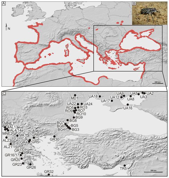 Distribution and sampling of Calomera littoralis in Europe.
