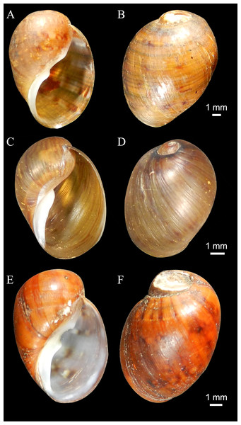 Shells of new species (Holotypes).