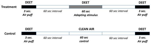 Adaptation protocol.